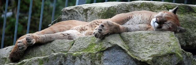 Cougar Mountain Zoo in Issaquah