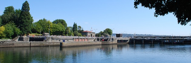Ballard Locks | Fish Ladder & Boat Passage