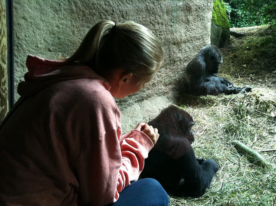 Woodland Park Zoo | Gorillas