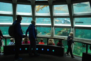 Seattle Aquarium | Underwater Dome