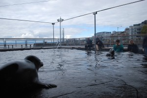 Seattle Aquarium | Harbor Seals