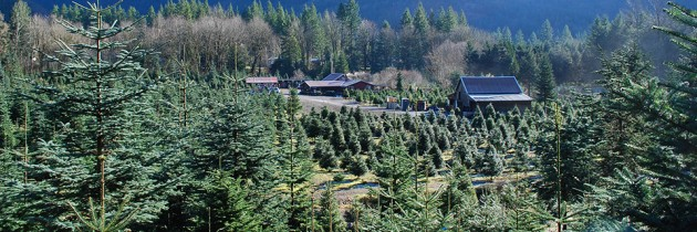 Mountain Creek Christmas Tree Farm in Snoqualmie