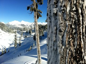 snowshoeing at mount baker