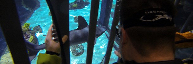 Eye-to-Eye Shark Dive | Point Defiance Zoo & Aquarium