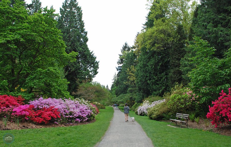 Washington Park Arboretum | Azalea Way