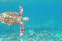 Honolua Bay | Best Snorkeling in Maui