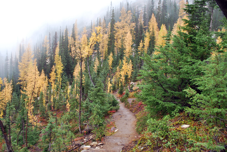 Best time to see golden larches