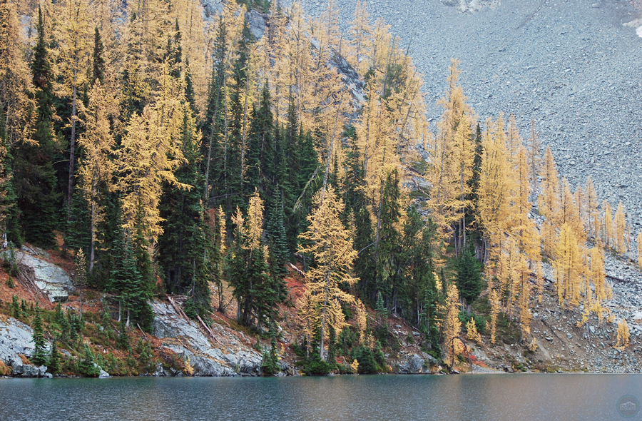 Blue Lake golden larches