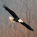 Best Time to See Skagit Valley Bald Eagles