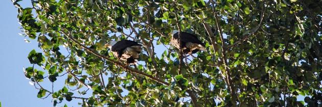 Magnolia Park | Barbecues, Views & Bald Eagles