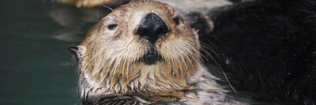 Seattle Aquarium | A Peek Inside Puget Sound & Beyond
