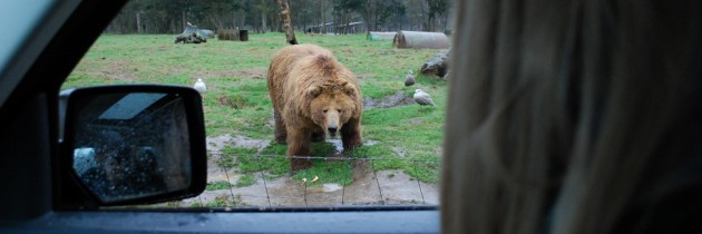 Olympic Game Farm in Sequim