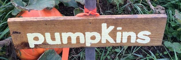 First Light Farm Pumpkin Patch in Carnation