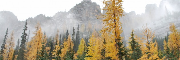 Golden Larches at Blue Lake in North Cascades
