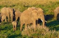African Safari | The Big Five in Tanzania
