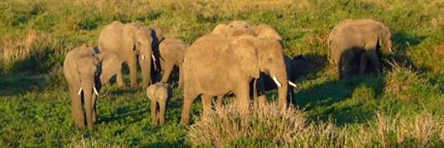 African Safari   The Big Five in Tanzania