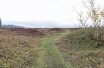 Mima Mounds | Walk Through a Natural Mystery