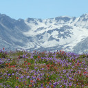 Harry's Ridge | Mount St. Helens Hiking