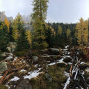 Best Time to See Golden Larches in Washington
