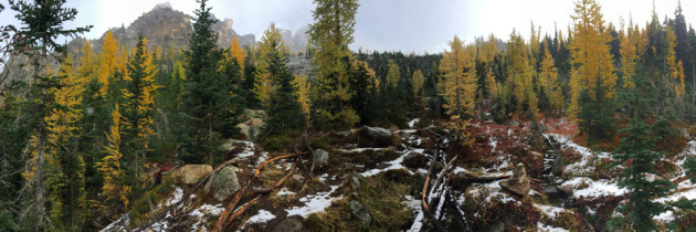 Golden Larch March in the North Cascades
